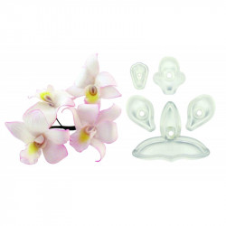Singapore Orchid - Set of 5