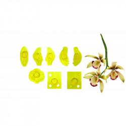 Small Cymbidium Orchid - Set of 8