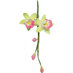 Cymbidium Orchid Flow Petal Cutt Set 2sml